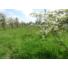 Kép 5/25 - Eladó tanya Jász-Nagykun-Szolnok megye, Mezőtúr, Alsórész, Alsórészi regálé 260